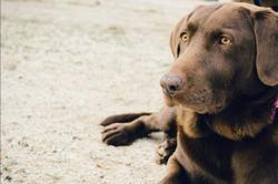 À l'attention des propriétaires d'animaux pucés