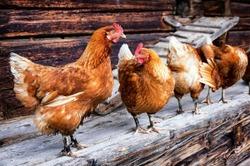 Mesures d'application contre la Grippe aviaire